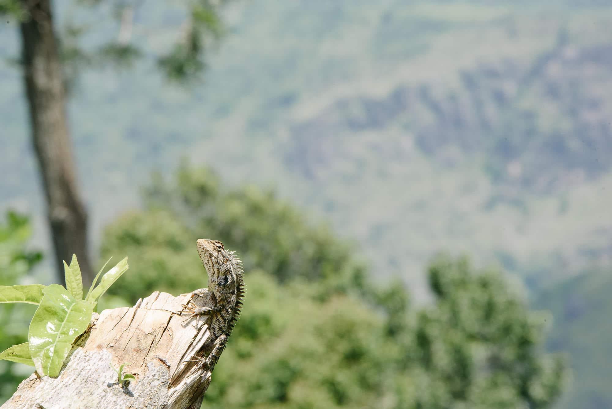 Our two week tour of Sri Lanka 13