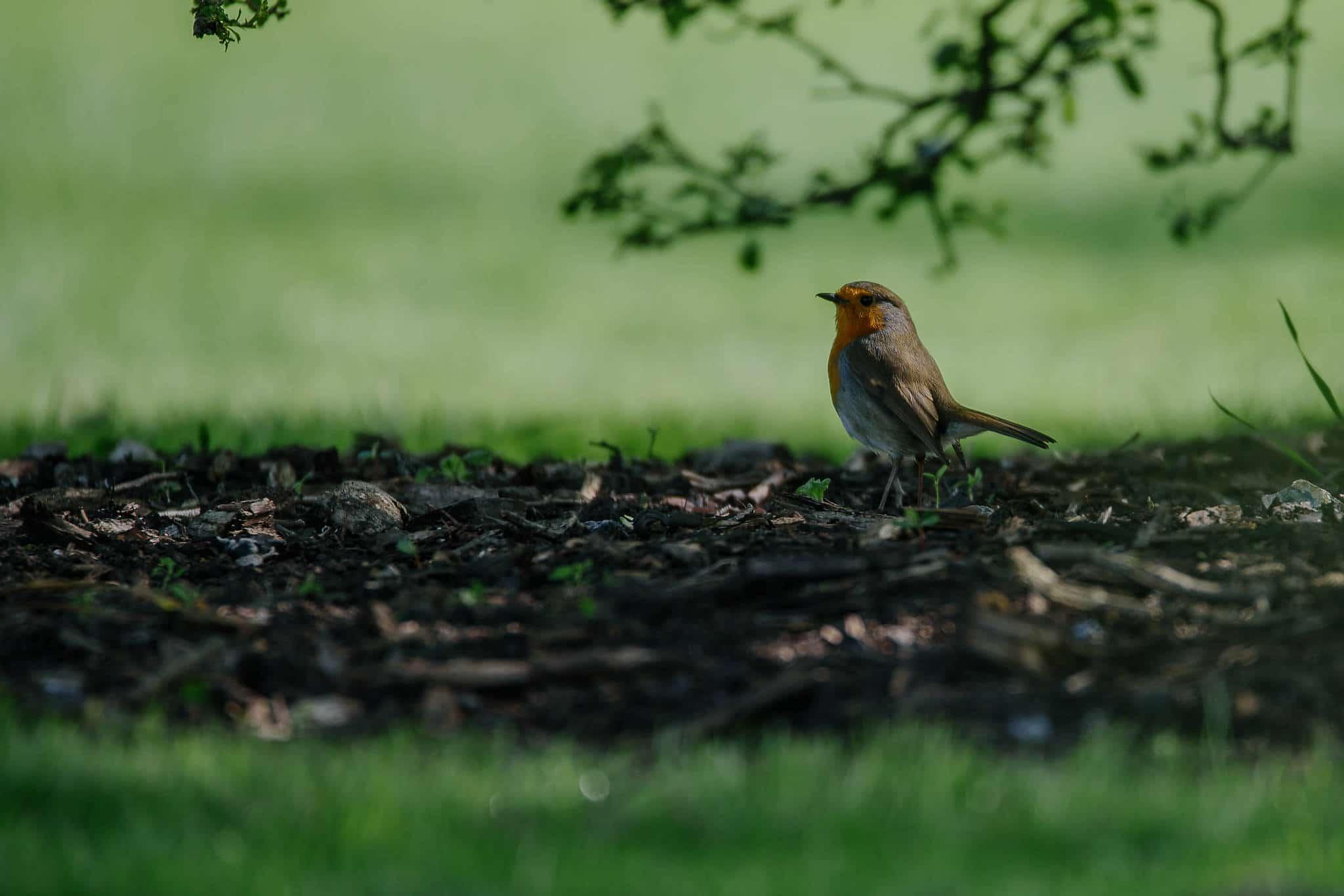 Kew Gardens 22